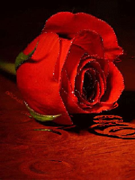 Foto animada | Flowers gif, Beautiful red roses, Red roses
