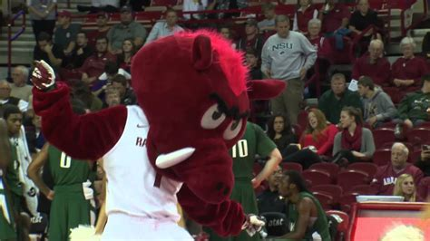 "Arkansas Razorback Mascot ""Big Red"" - YouTube"