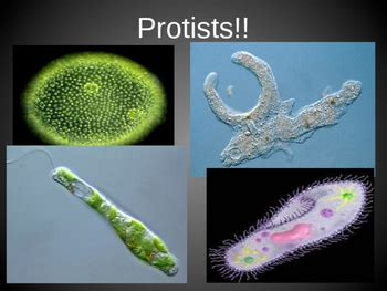 Protists Powerpoint by Bringing Science to Life   TpT