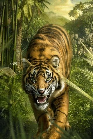 Tiger hunting GIF - Download & Share on PHONEKY