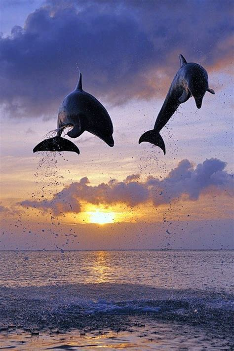 340 best Dolphins images on Pinterest | Dolphins, Water
