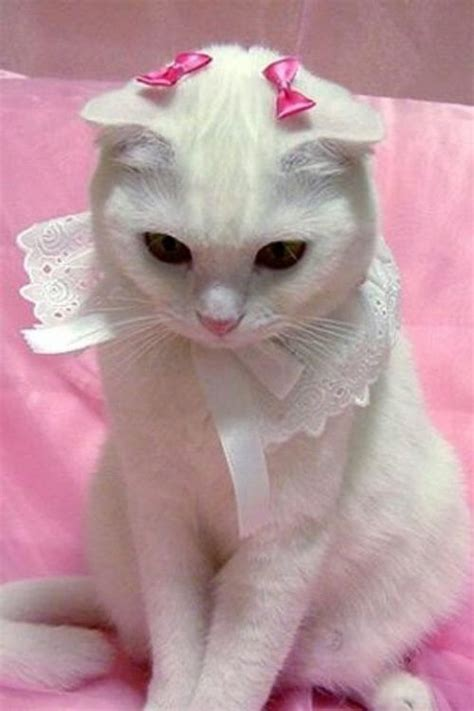 animal, cat, cute, pale, pastel - image #3550001 by rayman
