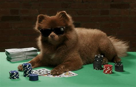 Dogs Playing Poker Bert GIF by Bertie The Pom - Find